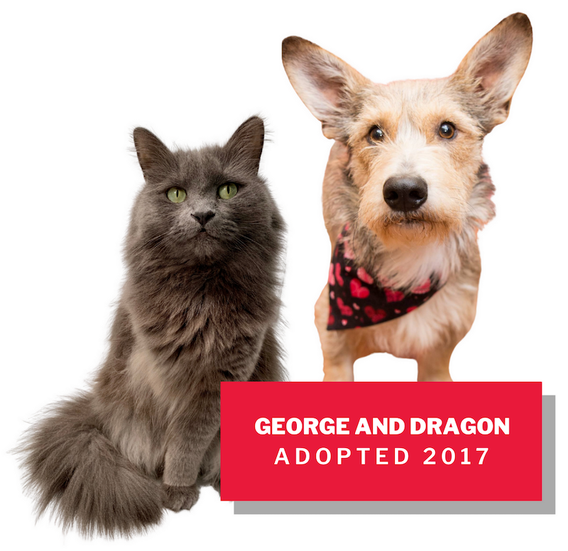Dragon and George, adopted 2017